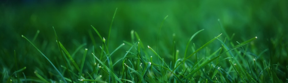 green-grass-1920x1200-wallpaper.jpg