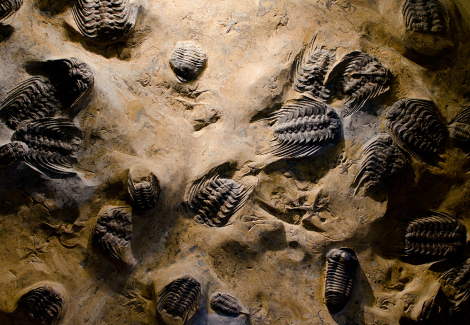 Why do fossils matter?
