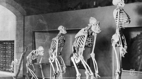 Retro Report's Evolution under Creationism Attack